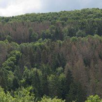 (04) Waldschäden im Rurtal bei Heimbach