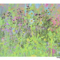 Nr. 102 Blumengarten