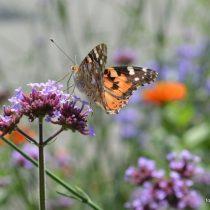 Nr. 119 Schmetterling