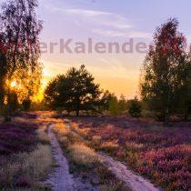 Galeriebild3-09-Heide