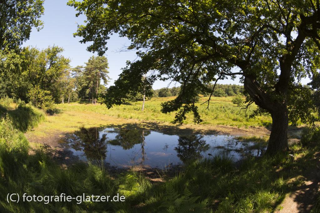 Tümpel am Fliegenberg in der Wahner Heide; Fisheye-Aufnahme