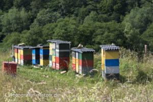 Bienenstöcke im Genfbachtal