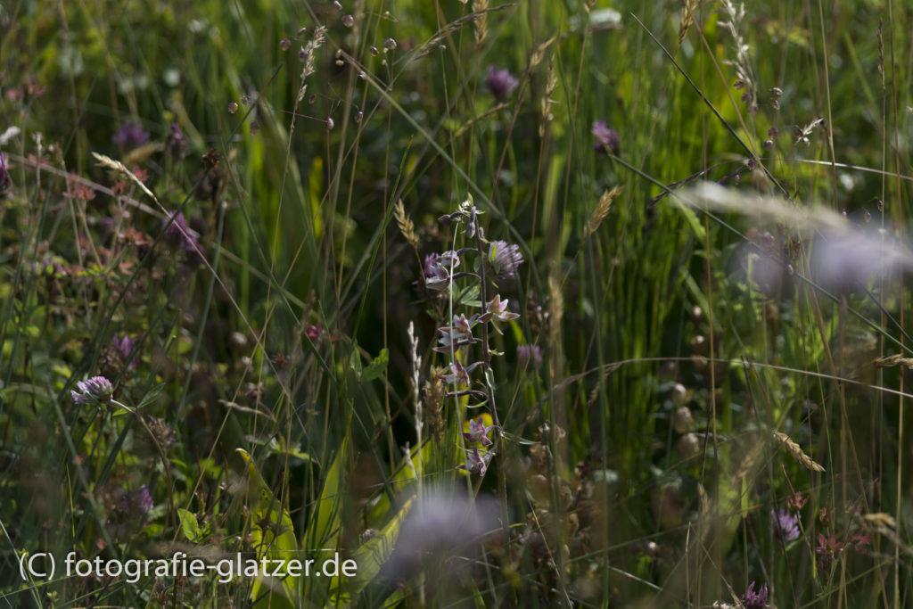 Waldvögelein in der Mitte des Bildes / Genfbachtal Nettersheim,