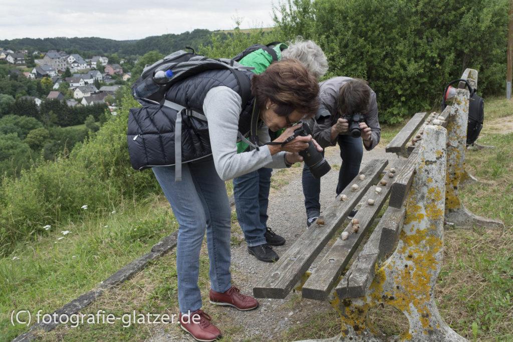 Schneckenjagd in Nettersheim - drei Frauen beugen sich über eine Holzbank, auf der Weinbergschnecken kriechen