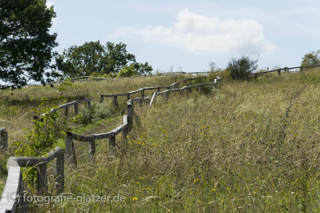 Der Weg hinauf zur Windkuppe führt durch Wildblumenwiesen