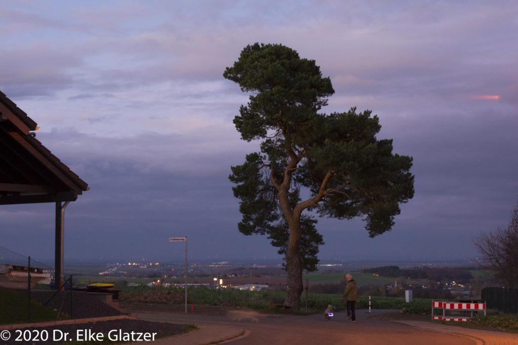 In der Abenddämmerung wirkt der Baum düster, Dezember 2015