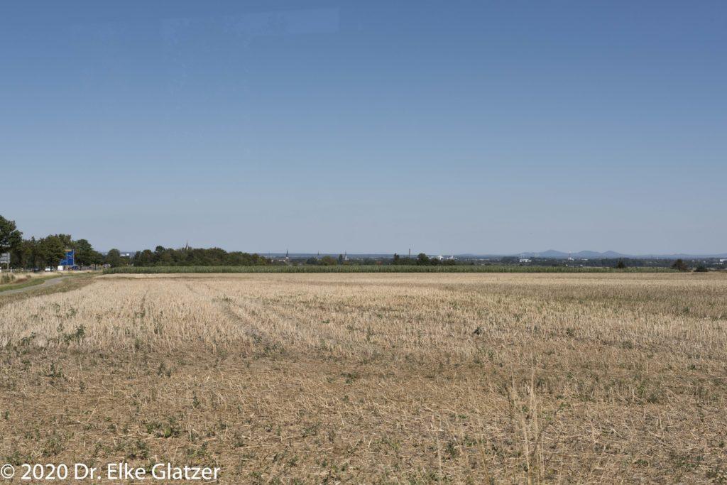 Über die abgeernteten Felder schweift der Blick bis zum Siebengebirge